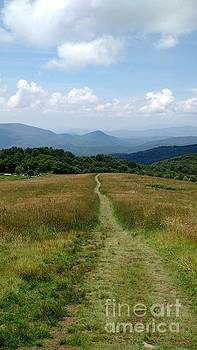Max Patch Trail Summer by Anita Adams