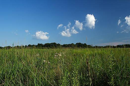 Meadow by Amanda Kiplinger