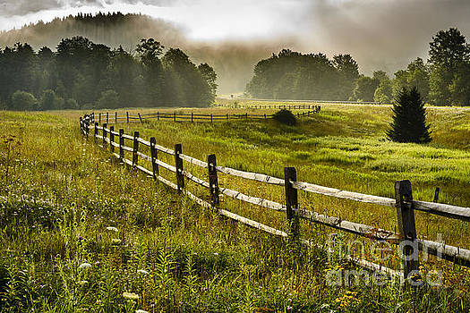 Meadow and Morning Mist by Thomas R Fletcher