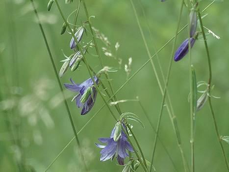 Meadow Bells by Barbara St Jean