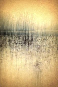 Meadow by Gail Gates