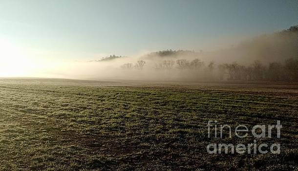 Meadow Morning  by Anita Adams