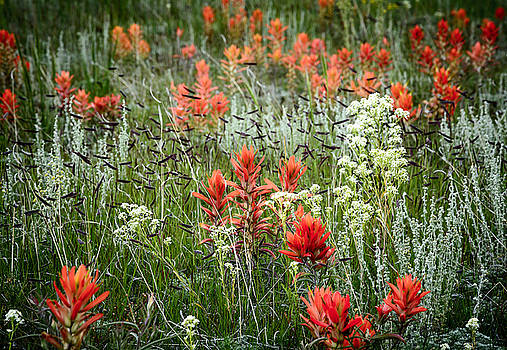 Meadow Wildflowers by The Forests Edge Photography - Diane Sandoval