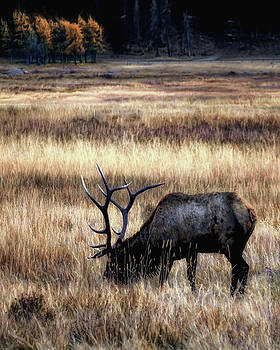 Meadows Of Horseshoe Park  by Jim Hill