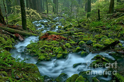 Meandering Through The Sol Duc Rainforest by Adam Jewell