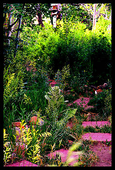 Medicinal Gardens by Susanne Still