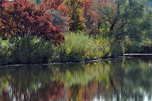 Meditations of Autumn by Diana Nigon