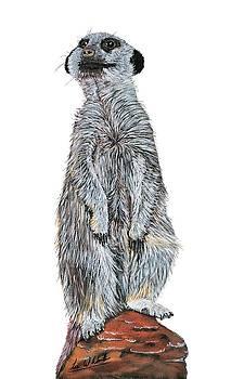 Lee Wolf Winter - Meer Curiosity Custom