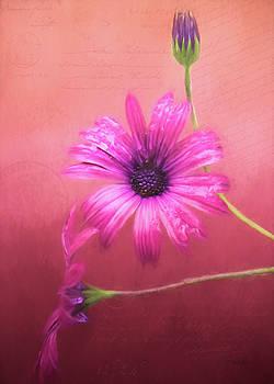 Memories Collected - Flower Art by Jordan Blackstone