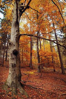 Jenny Rainbow - Memory of the Trees