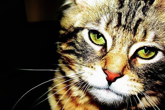 Meow by Dana Flaherty