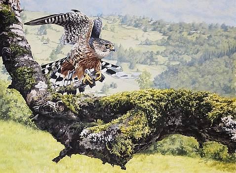Merlin by Julian Wheat