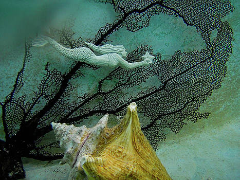 Mermaid and Seashell by Barbara Kelley