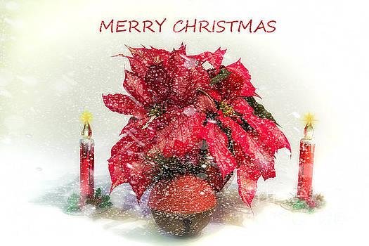 Merry Christmas by Linda Blair