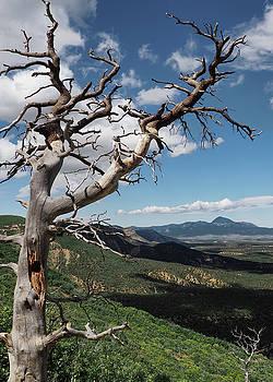 Mesa Verde by Jim Hill