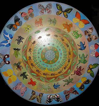 Metamorphosis Mandala by Amanda  Lynne