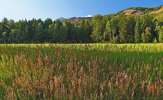 Methow Field Washington Landscape Art Larry Darnell by Larry Darnell