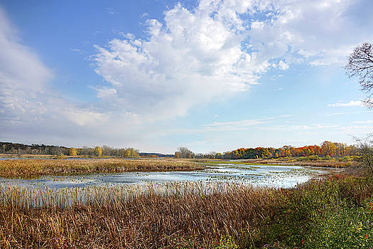 Michigan Marshland by Kathi Mirto
