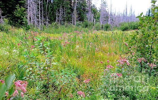 Michigan Wild by Jaunine Roberts