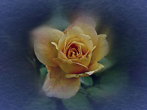 Mid September Rose by Richard Cummings
