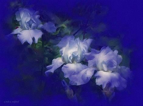 Midnight Blue Iris by Linda Seifried
