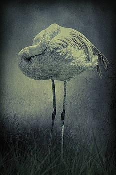 Midnight Flamingo by Diane Schuster