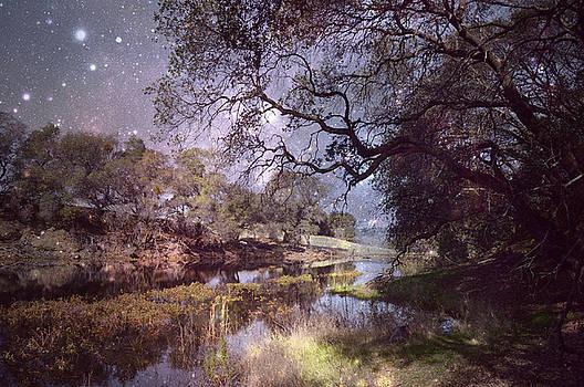 Midnight Serenade  by Pamela Patch