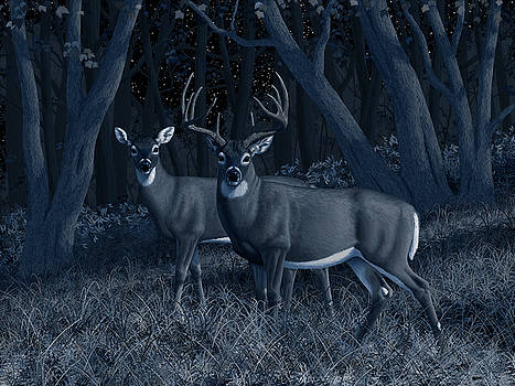 Midnight Stroll - Whitetail Deer At Night by Crista Forest