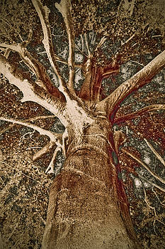 Frank Tschakert - Mighty Tree