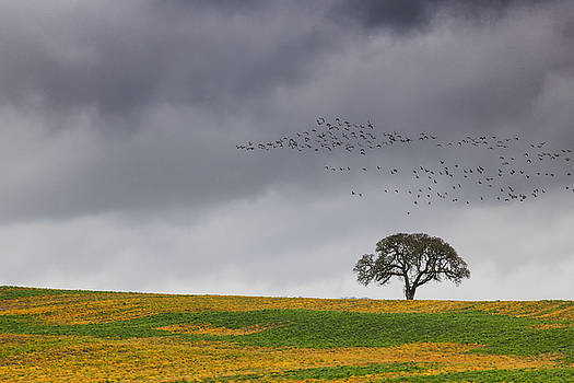Migrating Season by Dee Browning