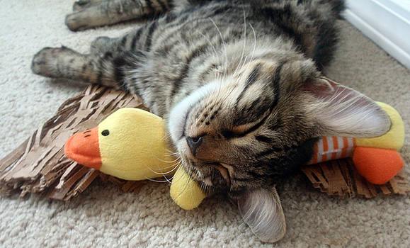 Mikino and Ducky Naptime by Jaeda DeWalt