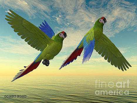 Corey Ford - Military Macaw