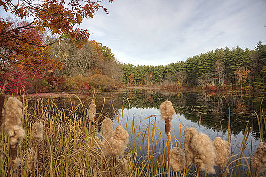 Mill Pond by Lee Fortier