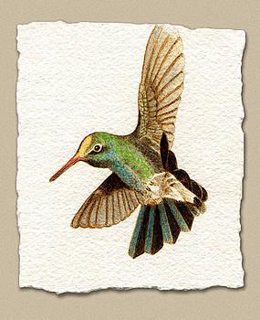 Miniature Broad Billed Hummingbird by Cate McCauley