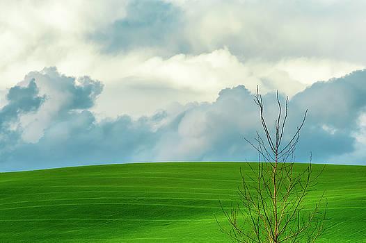 Minimalist Landscape I by Dee Browning