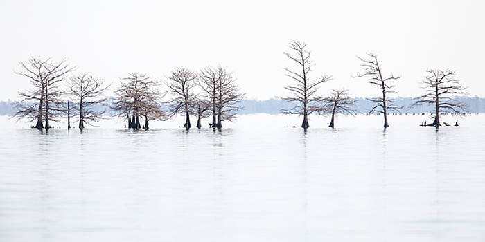 Minimalist North Carolina Landscape - Lake Mattamuskeet in Winter by Bill Swindaman