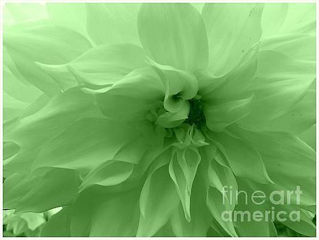 Mint Green Dahlia by Dora Sofia Caputo Photographic Art and Design