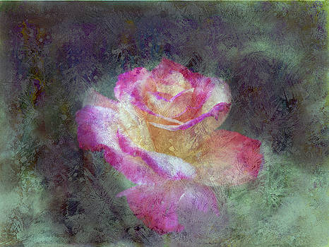 Mirage Rose by Don Wright