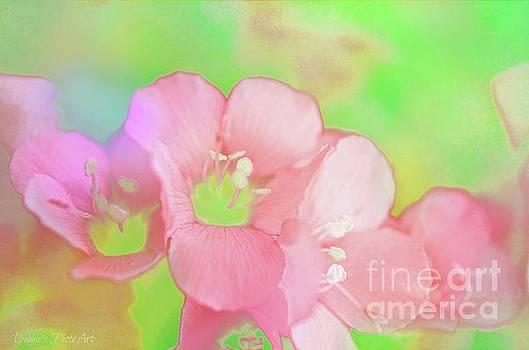 Missouri Wildflowers 5  - Polemonium reptans -  Digital Paint 7 by Debbie Portwood