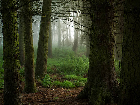 Mist and trees by Susan Tinsley