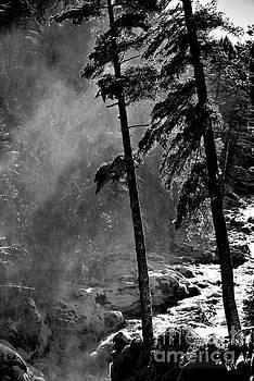 Mist by Elfriede Fulda