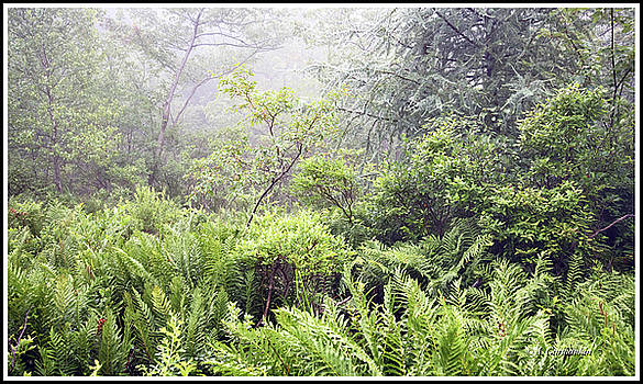 Misty Afternoon in an Eastern Forest Thicket, Pennsylvanis by A Gurmankin