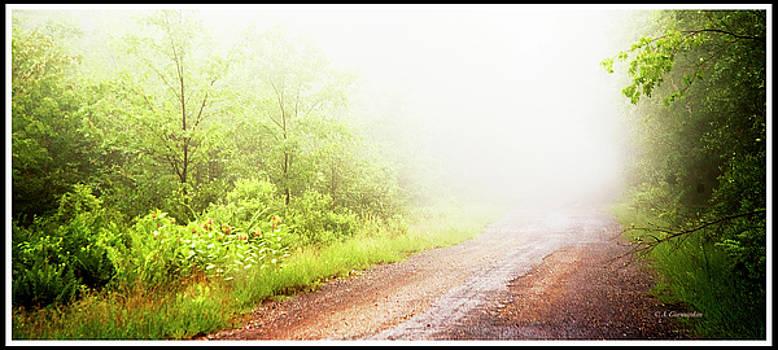 Misty Back Road, Pocono Mountains, Pennsylvania by A Gurmankin