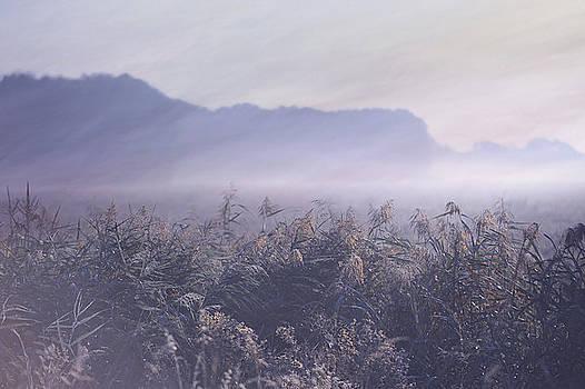 Jenny Rainbow - Misty Fields