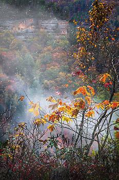 Misty Maple by Diana Boyd