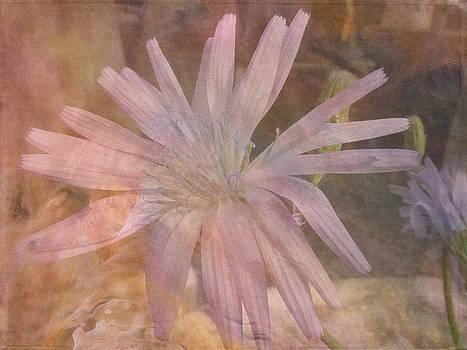 Misty Mauve by Lynn Bolt