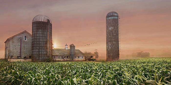 Misty Morning Maize by Robin-lee Vieira