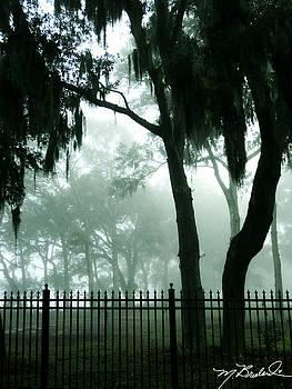 Misty Morning by Melissa Wyatt