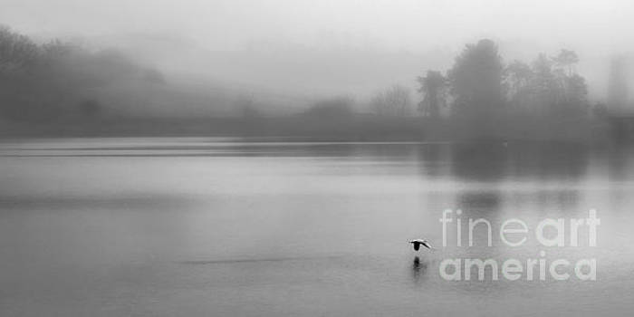 Misty Morning on The Lake by Linsey Williams
