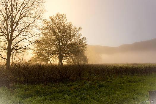 Misty Morning by Rebecca Hiatt
